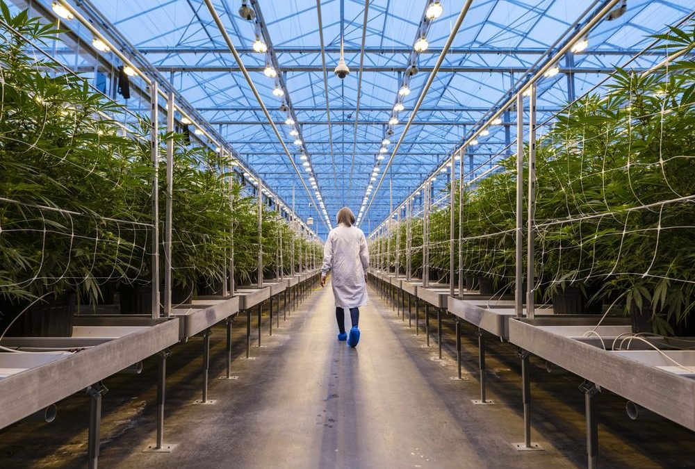 RFID and the Marijuana Industry